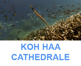 Phuket dive sites guide koh haa cathedrale