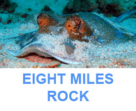Phuket Dive guide ; Eight miles rock