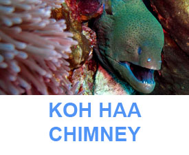 Phuket dive sites guide koh haa chimney dive site