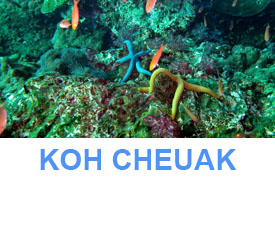 Phuket Dive Guide southern trang islands koh cheuak dive site