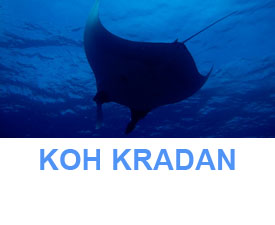 Phuket Dive Guide Southern Trang islands Koh Kradan